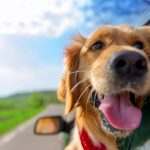 Pet-Friendly Resorts And Hotels in India – Apt Family Vacations Together With Your Pet
